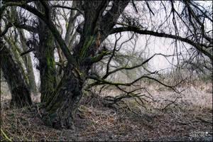 Spooky tree 1 by AStoKo