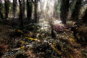 Wonderland Forest by AStoKo
