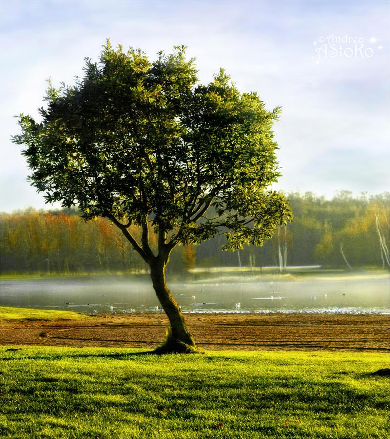 Always Green ~ Winter Tree by AStoKo
