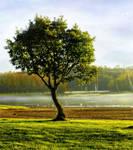 Always Green ~ Winter Tree