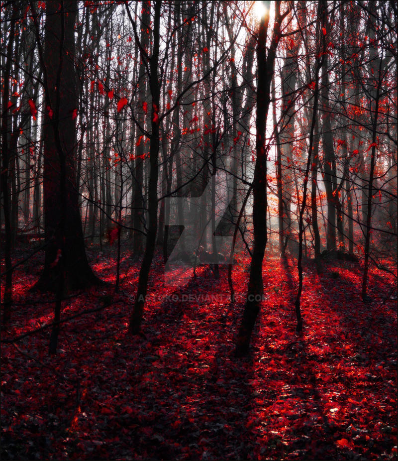 Trees Red Autumn Forest 2 AStoKo STOCK By