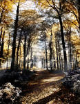 Autumn forest path Tree ~ S T O C K by AStoKo