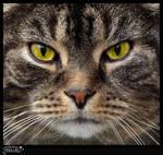 Cat Balu - The eighteen years old veteran