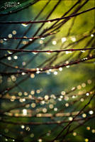 After the rain 2 by AStoKo