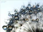 Silver drops - Strange world