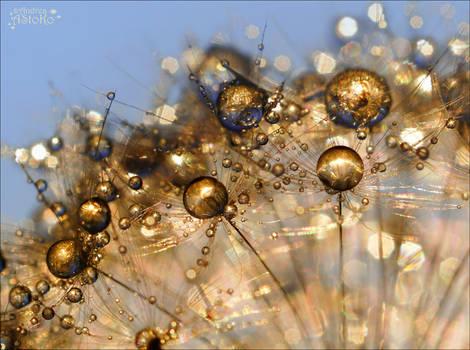 Golden drops - Strange world