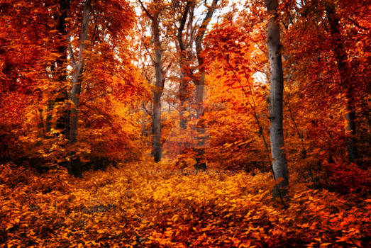 Red forest ~ STOCK by AStoKo