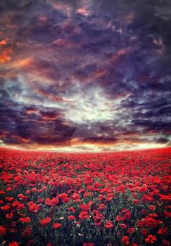 Poppy Field Meadow II ~ S T O C K by AStoKo