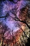 Looking up ~ AStoKo