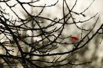 Autumn Impression ~ AStoKo