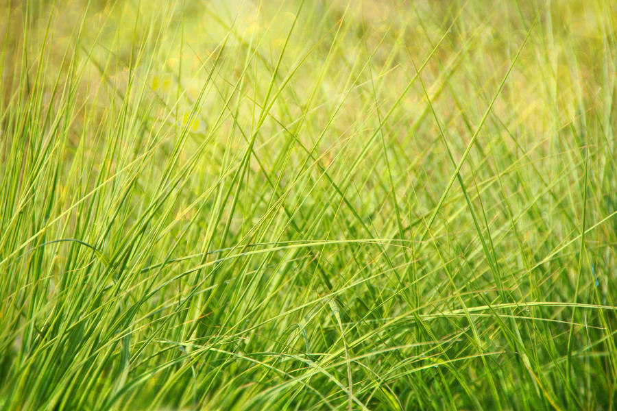 grass texture ~ STOCK by AStoKo by AStoKo