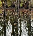 Swamp ~ STOCK by AStoKo