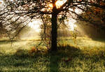Light flooded apple Tree