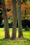 Autumn trees b ~ STOCK by AStoKo