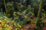Forest and rocks ~ STOCK