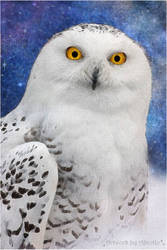 Hedwig ~ Harry Potter Owl