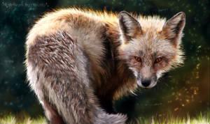 Meet the fox by AStoKo