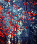 Autumn leaves paint background S T O C K by AStoKo