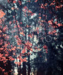 Red Tree Leaves Background Textur 1