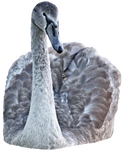 swan png - free stock