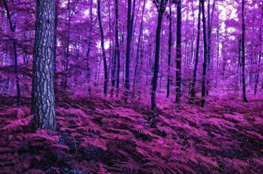 Purple Forest - Free Stock for Deviant Art Members by AStoKo