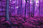 Purple Forest - Free Stock for Deviant Art Members