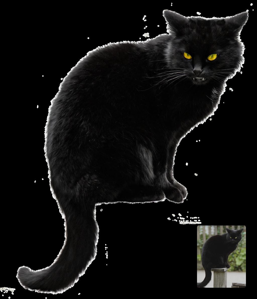 Public Domain Black Cat Eyes