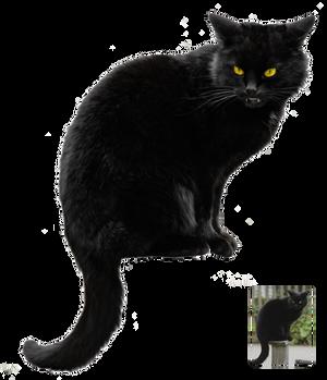 Black cat ~ Halloween VS STOCK