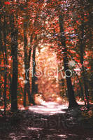 Autumn Red Forest VS by AStoKo