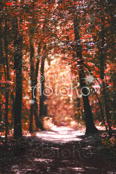 Autumn Red Forest VS