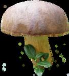 mushroom 8 STOCK