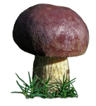 mushroom 3 STOCK