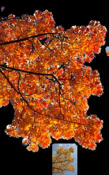 Autumn leaves 3 STOCK
