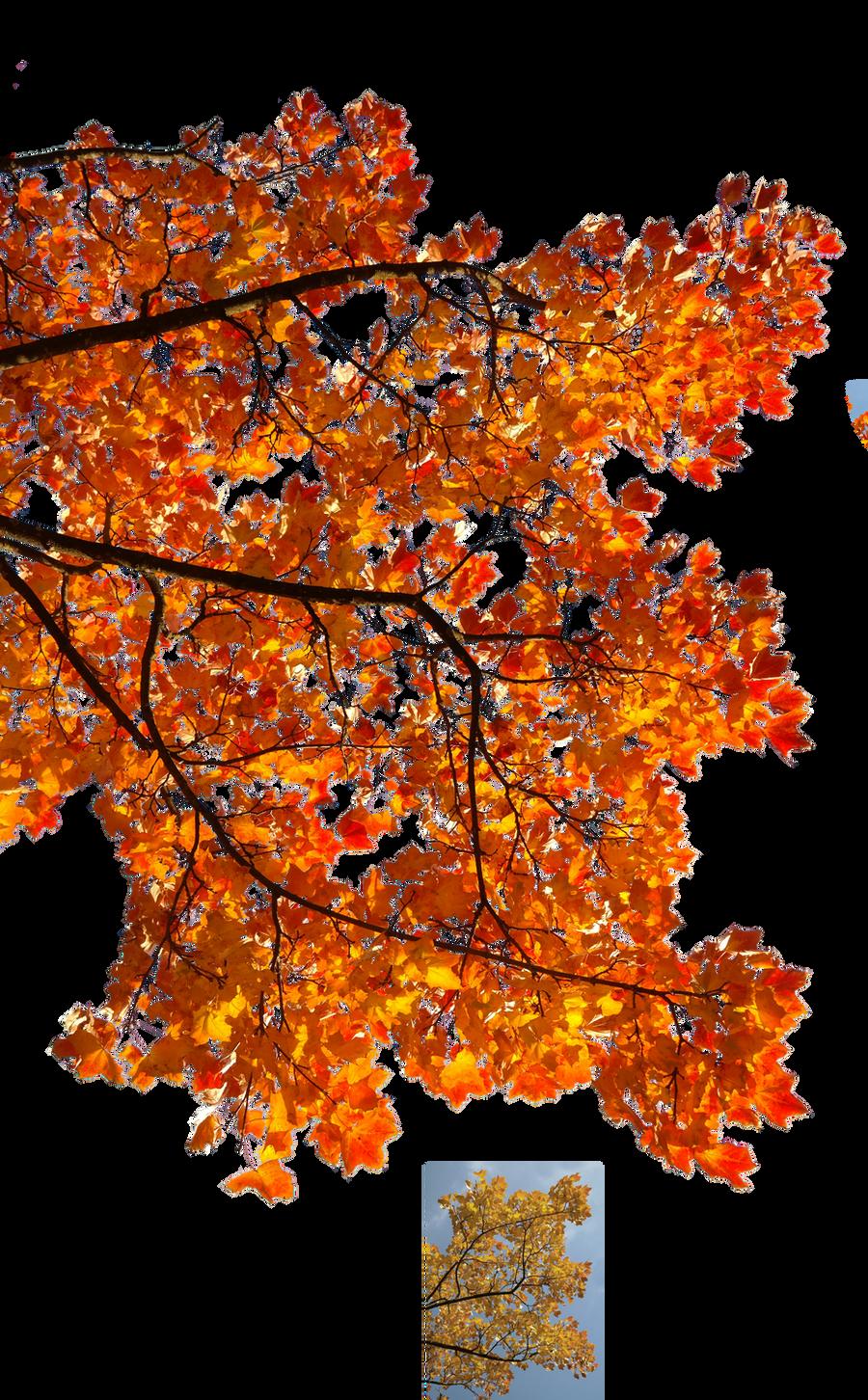Autumn leaves 3 STOCK by AStoKo on DeviantArt