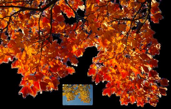 Autumn leaves 1 STOCK