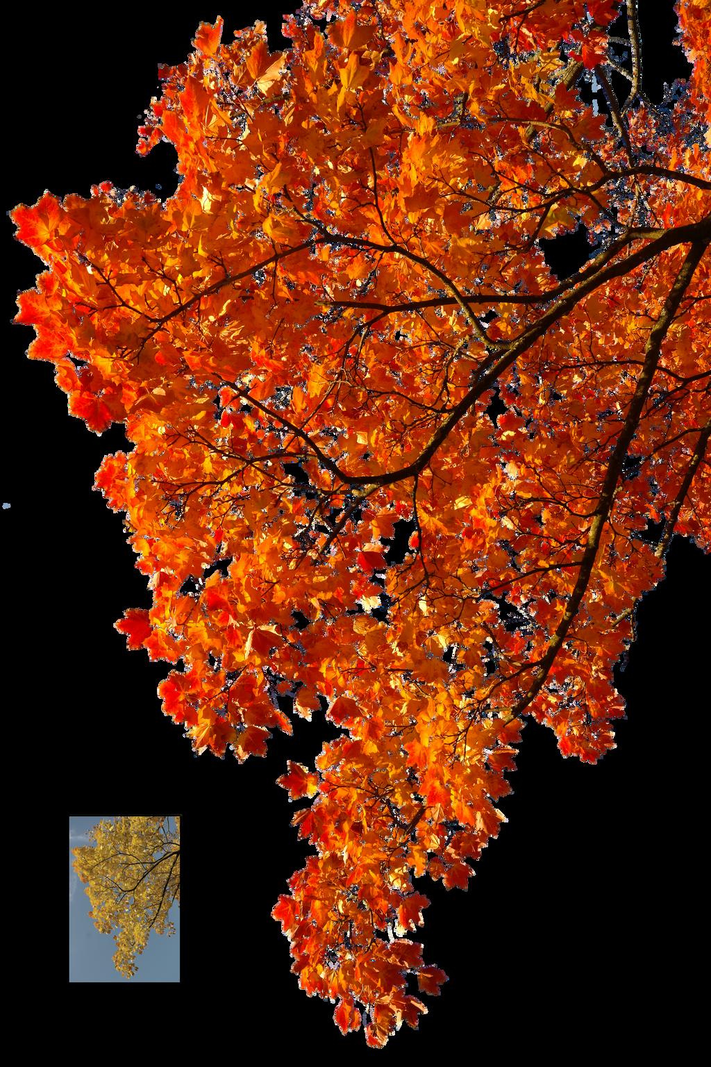 Autumn leaves 2 STOCK by AStoKo on DeviantArt