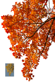 Autumn leaves 2 STOCK
