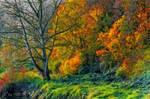 Autumn ~ surreal 2015 by AStoKo