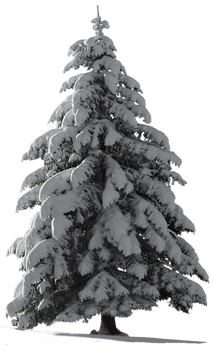 Christmas Tree Snow for my watcher ~ STOCK