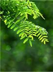 Green leaves STOCK