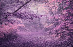 Purple Autumn Forest STOCK by AStoKo