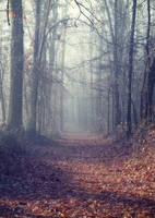 Foggy Autumn forest STOCK by AStoKo by AStoKo