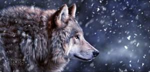 Snow Walker by AStoKo