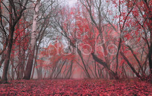 Autumn Forest VS STOCK purple red