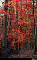Autumn forest 2015b1  S T O C K by AStoKo by AStoKo