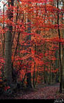 Autumn forest 2015b1  S T O C K by AStoKo