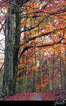 Autumn forest 2015a1  S T O C K by AStoKo
