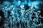 Monochrom blue flowers