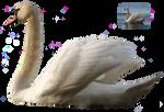 Swan 5 png FREEBIE STOCK by AStoKo