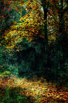 Autum forest with dark abstract Texture 1 STOCK